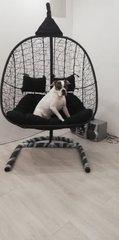 Фото отзыва о товаре Подвесное кресло-кокон SEVILLA TWIN коричневое + каркас