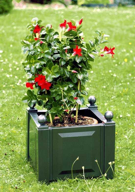 Квадратный ящик для растений 38003 фото