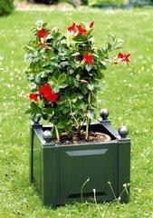 фото Квадратный ящик для растений 38003