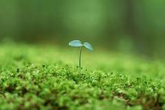 фото Растительный грунт