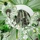 Фото №8 Люстра с цветным хрусталем 3125/5 хром/зелёный Strotskis